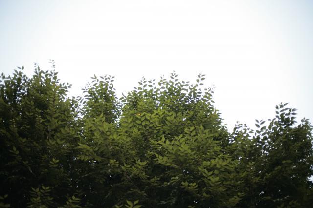 ファイル 265-3.jpg
